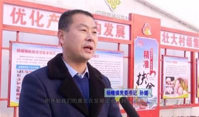 """杨疃镇:""""小蘑菇""""成就扶贫""""大产业"""""""