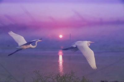 【镜头】白鹭下秋水 孤飞如坠霜
