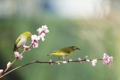毛澤東詩詞中的鳥獸魚蟲