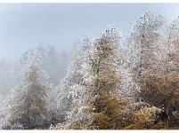镜头 | 小雪至 天渐寒