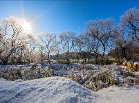 镜头   大雪至 仲冬始