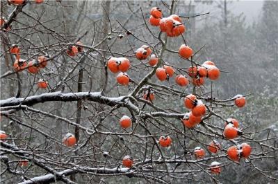 鏡頭   歲寒已冬至 數九寒天啟