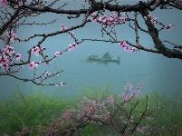 镜头 | 春色中分 万物竞生