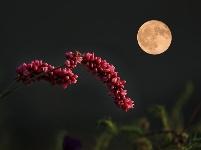 镜头   万里无云镜九州 最团圆夜是中秋