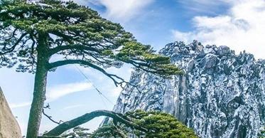"""黄山风景区运用3D数字建模技术 监测保护""""国宝""""迎客松"""
