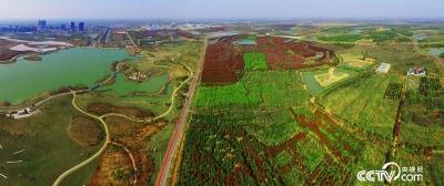 【美丽中国长江行】看江淮分水岭上的生态林海:绿了江岸富了百姓