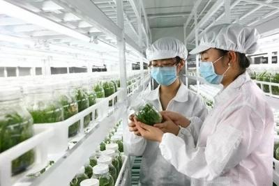 郑蒲港新区特色种养业成效显著