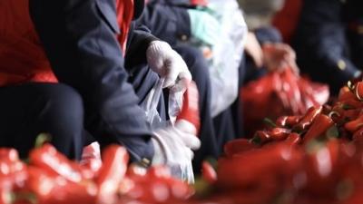 全国蔬菜之乡春耕忙