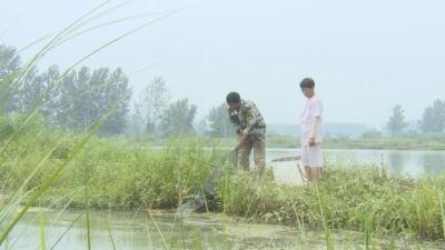 走向我们的小康生活 | 和县石杨镇:龙虾养殖助农脱贫致富